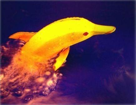 Фотоприкол банан