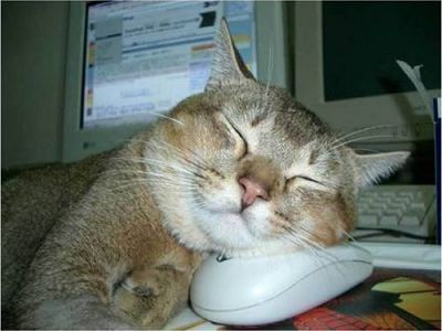 Фотоприкол кошка и мышка